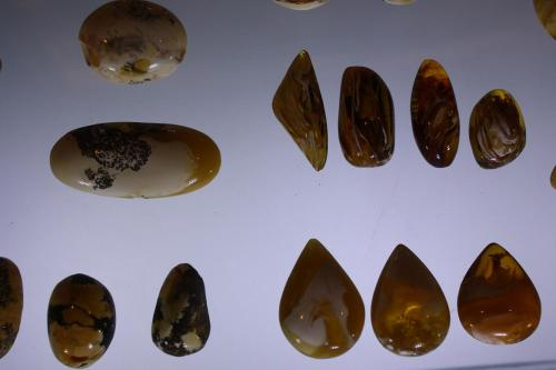 Polished amber stones in the Amber Museum, Gdansk. Photo by Richard Varr